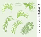 tropical coconut palm leaves... | Shutterstock .eps vector #617676419