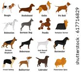 seth of different breeds of... | Shutterstock .eps vector #617716829