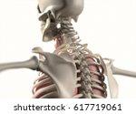 anatomy body human. spine  neck ... | Shutterstock . vector #617719061