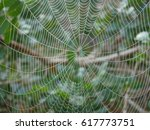 Spider Web With Dew Drops On A...