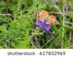 Small photo of American Painted Lady Butterfly
