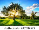 the sun shining through a tree... | Shutterstock . vector #617837579