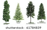 set of four trees isolated... | Shutterstock . vector #61784839