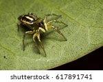 jumping spider | Shutterstock . vector #617891741