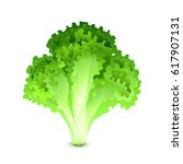 green salad leaves isolated on... | Shutterstock .eps vector #617907131