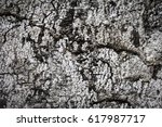 tree bark texture background | Shutterstock . vector #617987717