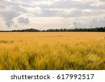 wheat field under the sun.... | Shutterstock . vector #617992517