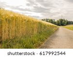 wheat field  by the road under... | Shutterstock . vector #617992544