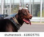 young brown doberman dog with... | Shutterstock . vector #618025751