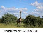 giraffe | Shutterstock . vector #618053231