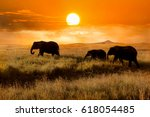 Family of elephants at sunset in the national park of Africa.