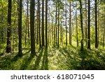sunrise in the forest. | Shutterstock . vector #618071045