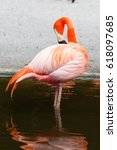 Small photo of American Flamingo, Everglades National Park, Florida, USA