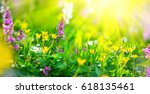 Beautiful Meadow Field With...