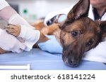 Stock photo veterinary surgeon treating dog in surgery animal healthcare 618141224