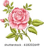 Stock vector vector illustration of pink rose for design 618202649