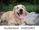 golden retriever dog | Shutterstock . vector #618252857