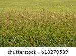 Glowing Edge Of Grass Flower