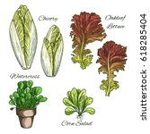 lettuce salads and vegetables... | Shutterstock .eps vector #618285404