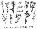drawing set of 10 field grasses ... | Shutterstock .eps vector #618341321