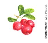 red huckleberry isolated on... | Shutterstock . vector #618448211