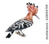 The Hoopoe Bird On White...