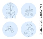 the set of different herbs in... | Shutterstock . vector #618468221