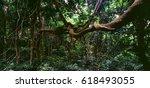 jungle   Shutterstock . vector #618493055