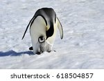 Stock photo emperor penguin with chick 618504857