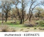 steppe  prairie  veldt  veld. ... | Shutterstock . vector #618546371