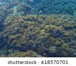 sea anemones and nemo | Shutterstock . vector #618570701