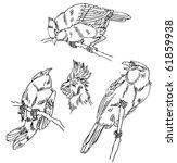 sketch bird | Shutterstock .eps vector #61859938