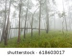 foggy forest in the morning | Shutterstock . vector #618603017