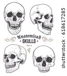 anatomical skulls vector set.... | Shutterstock .eps vector #618617285