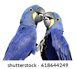 Two Hyacinth Macaws ...