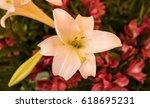 flower | Shutterstock . vector #618695231