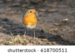 a pretty robin  erithacus... | Shutterstock . vector #618700511