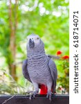 Small photo of African gray parrot and white face