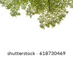 isolated green leaves on a
