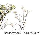 pink trumpet tree branch... | Shutterstock . vector #618762875