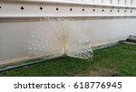 white peacock | Shutterstock . vector #618776945