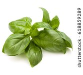 sweet basil herb leaves bunch...   Shutterstock . vector #618859289