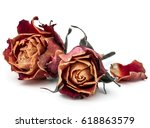 Stock photo dried rose flower head isolated on white background cutout 618863579