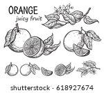 vector set oranges hand drawn... | Shutterstock .eps vector #618927674
