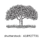 the isolated orange tree with... | Shutterstock .eps vector #618927731