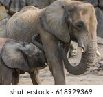 baby elephant cuddling to mom.... | Shutterstock . vector #618929369
