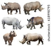 white rhinoceros  square lipped ... | Shutterstock . vector #618998795