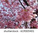 Cherry Blossom  Cherry Blossom...