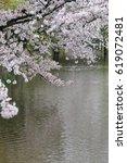 cherry blossoms   osaka japan | Shutterstock . vector #619072481