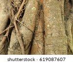 root of the tree   Shutterstock . vector #619087607